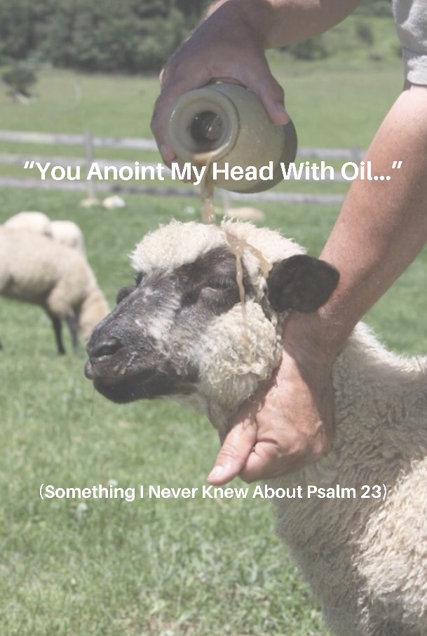 Image result for anointing sheep's head with oil